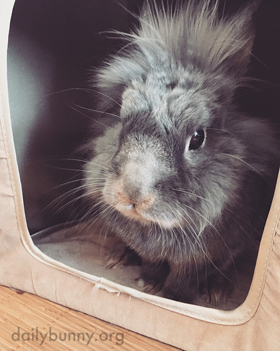Silly Human, My Hut Is Bunny-Sized, Not Human-Sized