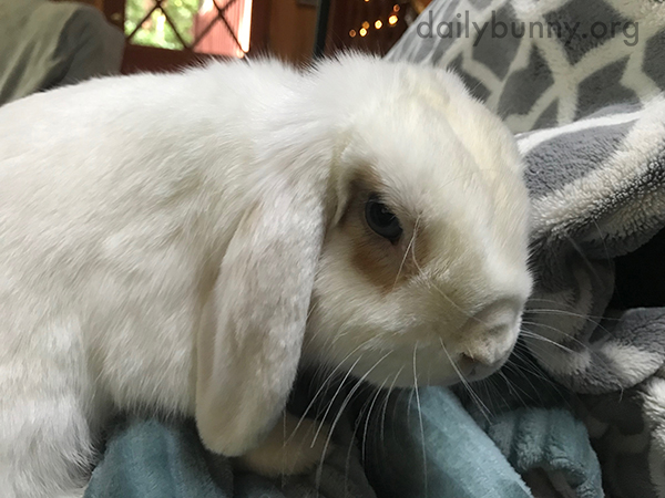 Bunny's Fur Looks So Silky Soft 1