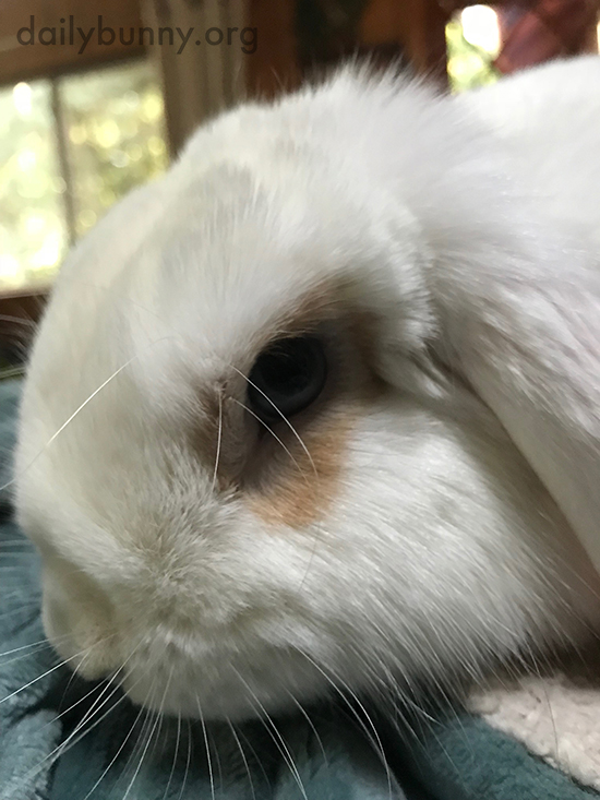 Bunny's Fur Looks So Silky Soft 2