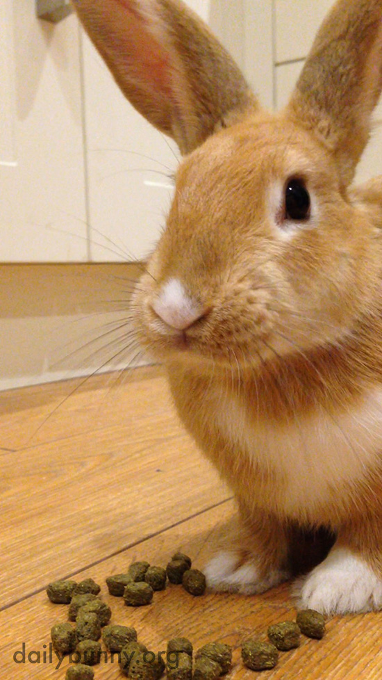 Bunny Waits for Human to Stop Watching Her Before Finishing Her Snack
