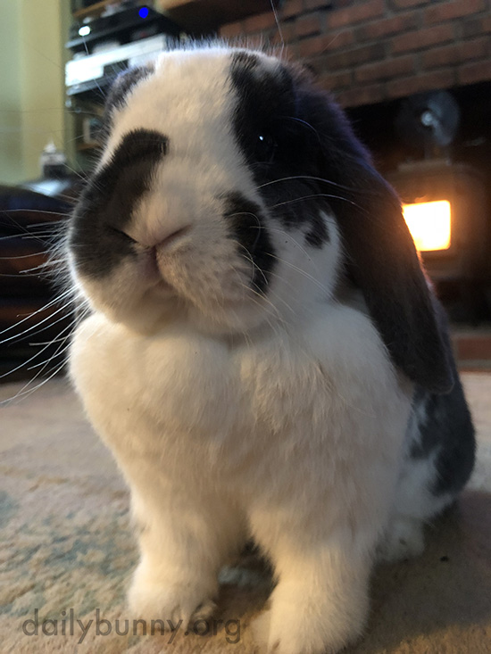 Bunny, You Look Very Stern