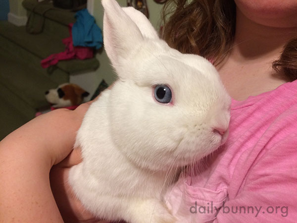 What Beautiful Blue Eyes You Have, Bunny!