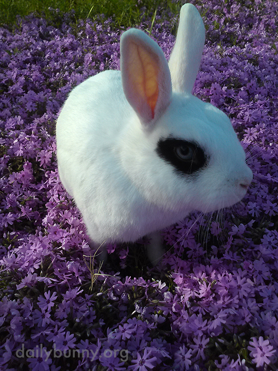 Bunnies Have a Romp Through the Flowers 1