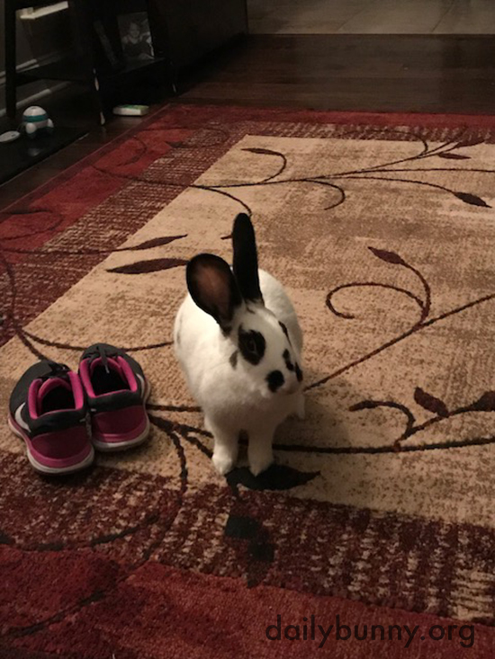 Bunny Acts Natural Before Attacking Human's Shoes 1