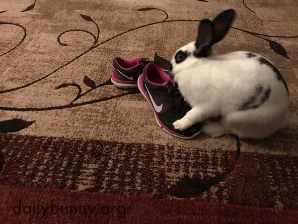 Bunny Acts Natural Before Attacking Human's Shoes 3