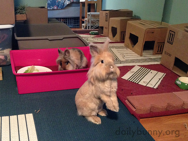 Bunnies Get to Know Their New Room 1