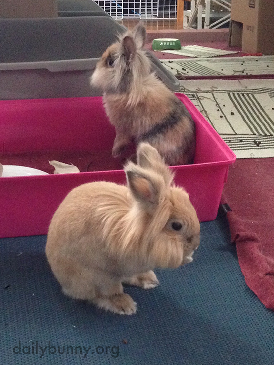 Bunnies Get to Know Their New Room 3
