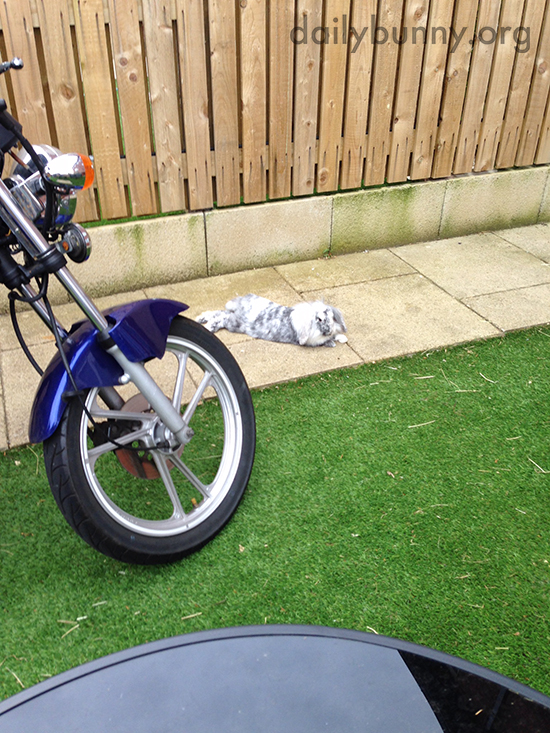 Bunny Hangs Out by the Motorcycle Because It Makes Him Look Tough