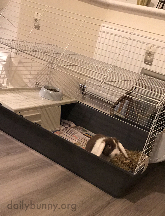 Bunny Drops by Her Cage for a Snack