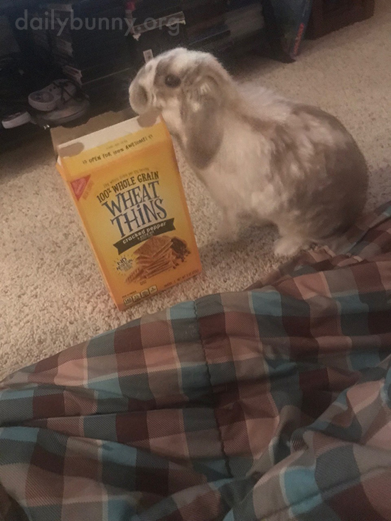 Bunny Knows There's Something in This Box 1