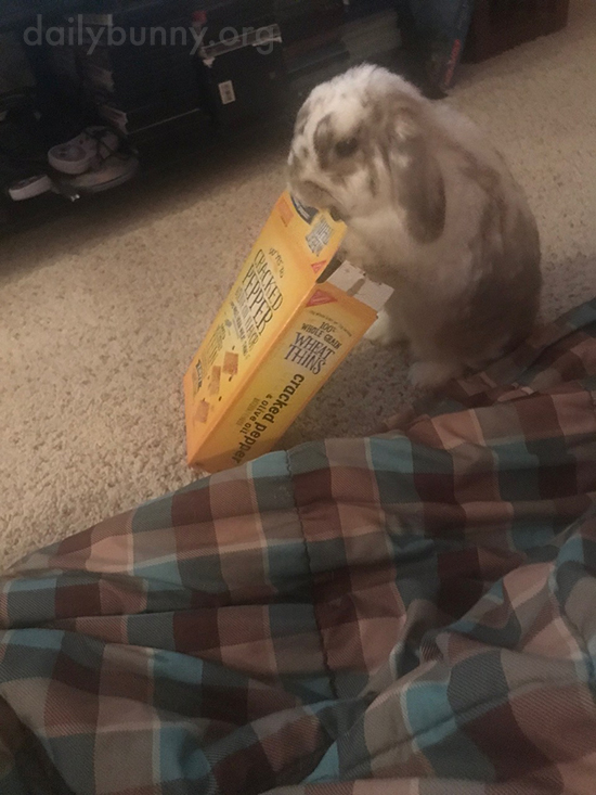 Bunny Knows There's Something in This Box 2