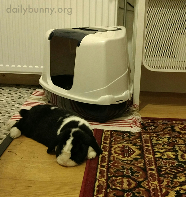Bunny's Relaxation Is Infectious