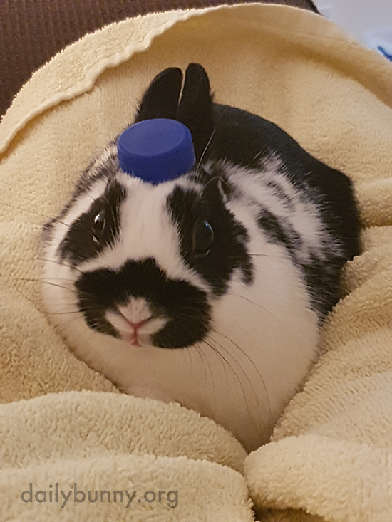 Bunny Is Shocked That His Hat Disappeared 1