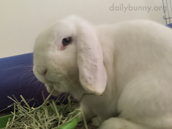 Bunny Doesn't Look So Pleased That Snacktime Is Interrupted