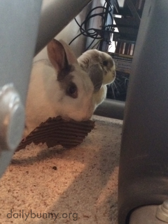That's a Good Piece of Cardboard for Nibbling, Bunny