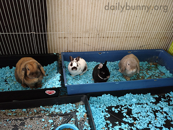 Bunnies in a Litterbox Lineup
