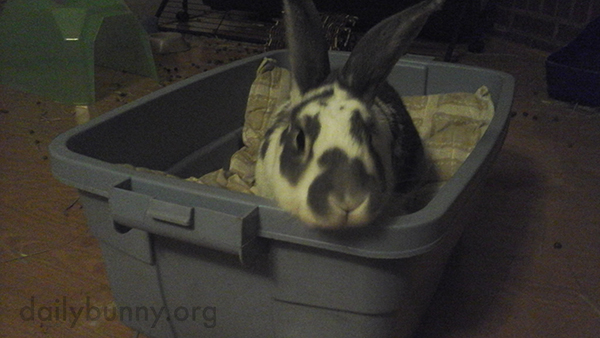 What a Fun, Cozy Box You Have, Bunny!