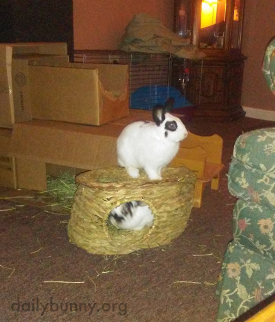 Bunny Suddenly Hopes This Hut Is Sturdy
