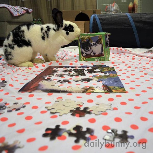 Bunnies Help Human Assemble—Then Destroy—a Puzzle 1