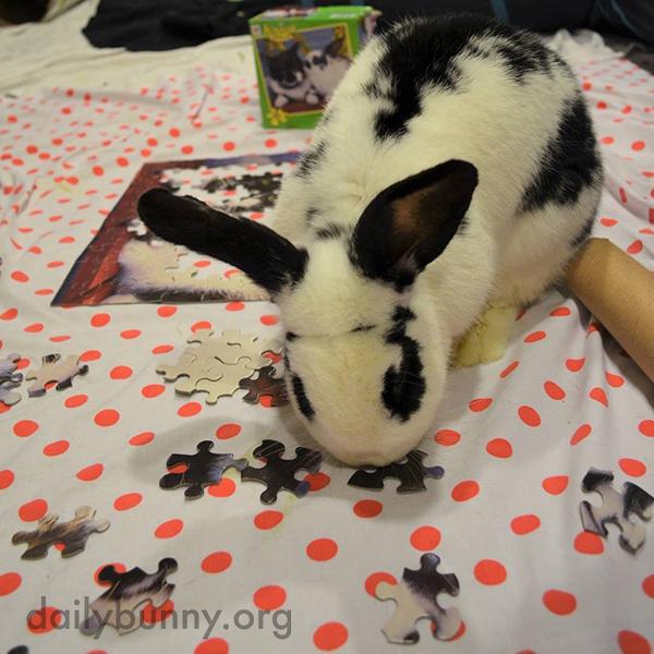 Bunnies Help Human Assemble—Then Destroy—a Puzzle 2