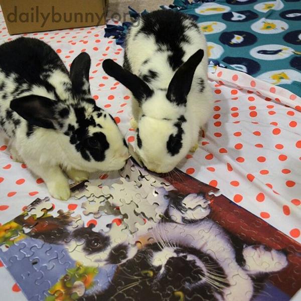 Bunnies Help Human Assemble—Then Destroy—a Puzzle 4