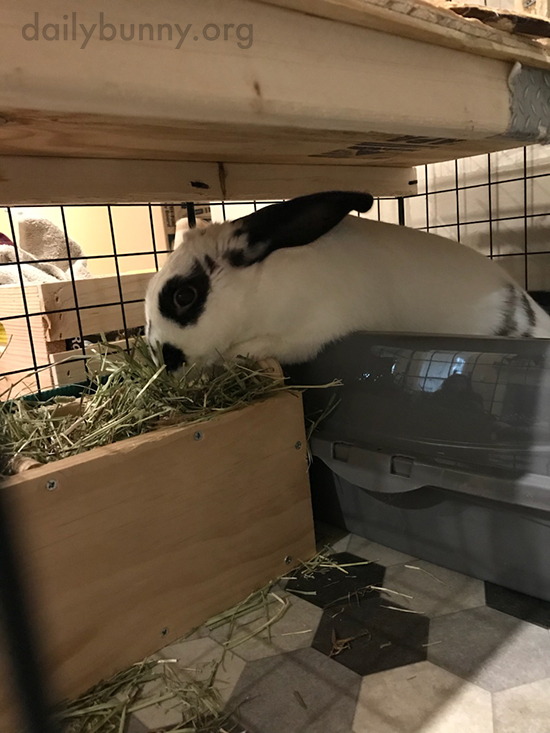 Bunny Digs In to Her New Hay Feeder 1