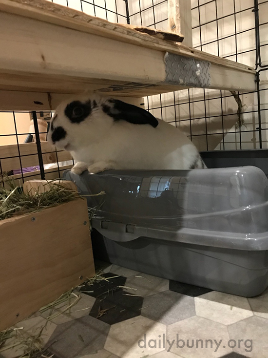 Bunny Digs In to Her New Hay Feeder 2