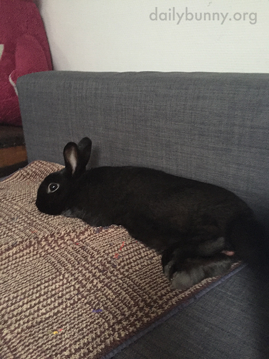 Bunny Spends a Lazy Sunday on the Sofa