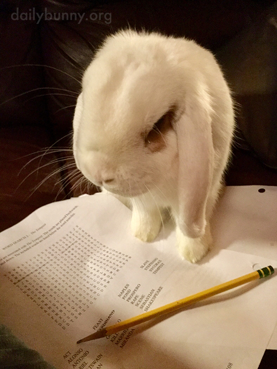 Bunny Helps Human Solve the Word Search