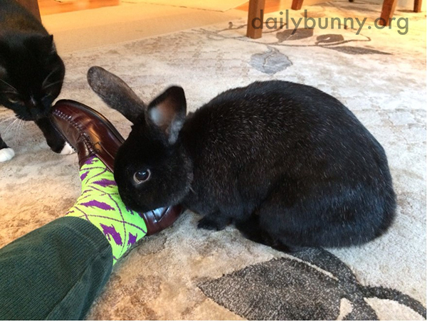 Stylist Bunny Approves of Human's New Socks 1