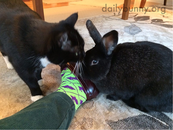 Stylist Bunny Approves of Human's New Socks 2