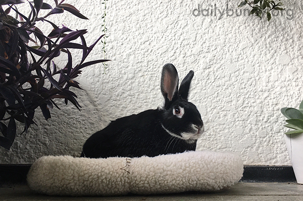 Bunny Enjoys a Little Time Among the Plants