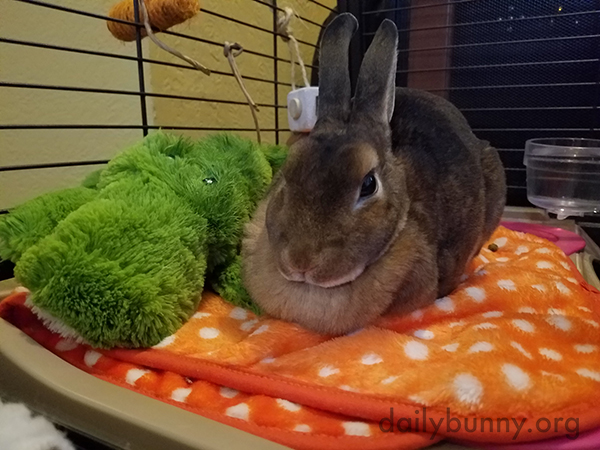 Bunny Loafs Around with Her Alligator Friend