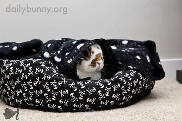 Bunny Tries Getting Out from Under the Blanket Before Deciding It's Quite Cozy, Actually 2