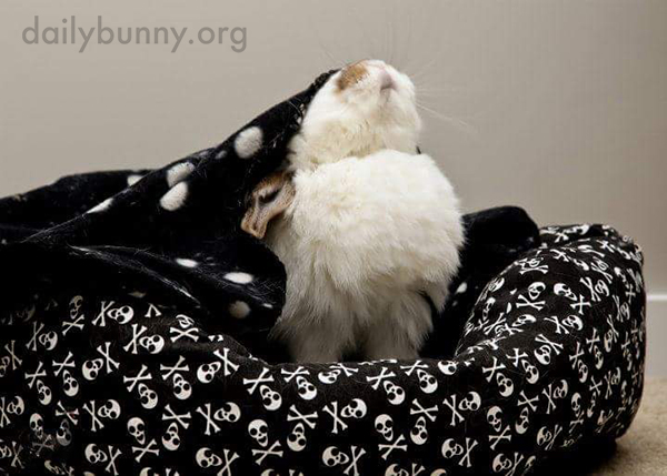Bunny Tries Getting Out from Under the Blanket Before Deciding It's Quite Cozy, Actually 1