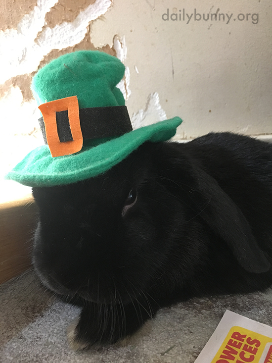 Bunny May Not Be in the Mood to Celebrate St. Patrick's Day 1