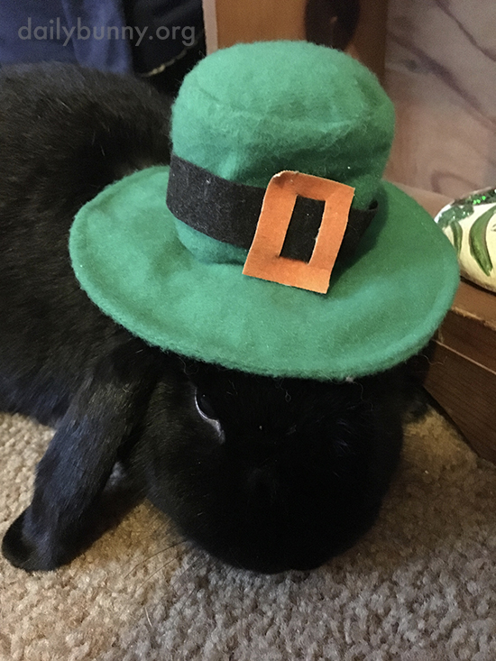 Bunny May Not Be in the Mood to Celebrate St. Patrick's Day 2