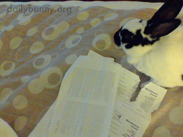 The Only Thing Good About Human's Doing Taxes Are All the Tasty, Rippable Papers!