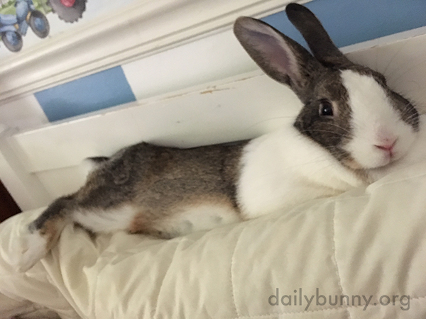What Could Be Better Than Cuddling with Bunny on a Bunday Morning?