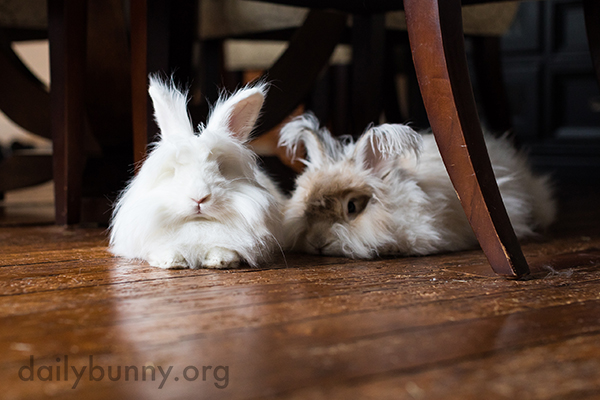 Together, Bunnies Look Like a Pair of Bunny Slippers
