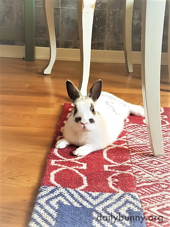Bunny Wonders Why Human Wants a Photo Even When He's Only Resting