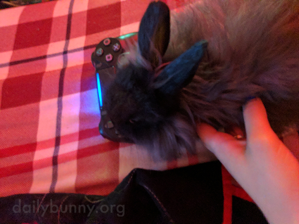 Are There Any Good PlayStation Games About Bunnies?
