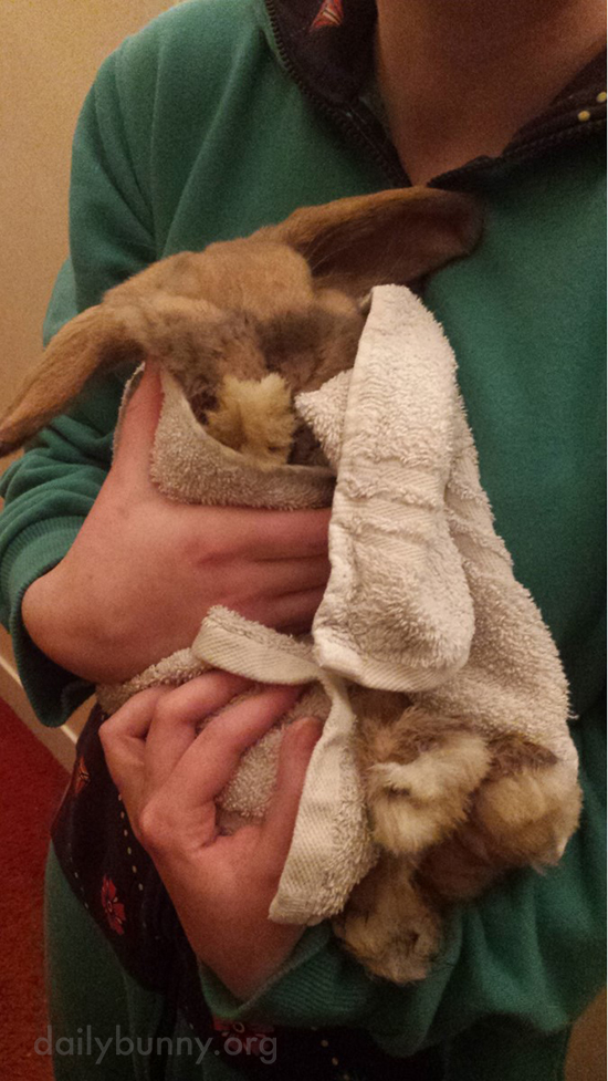 Bunny Regrets Jumping in the Bathtub