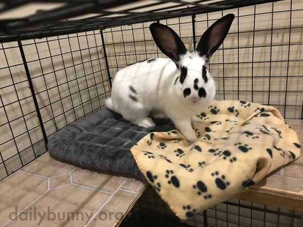 Bunny's Getting Up from Her Cozy Corner... Did She Hear the Treat Bag?