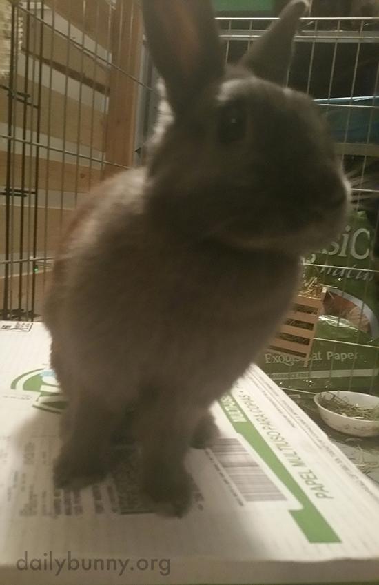 Did Bunny Just Hear the Crisper Drawer?