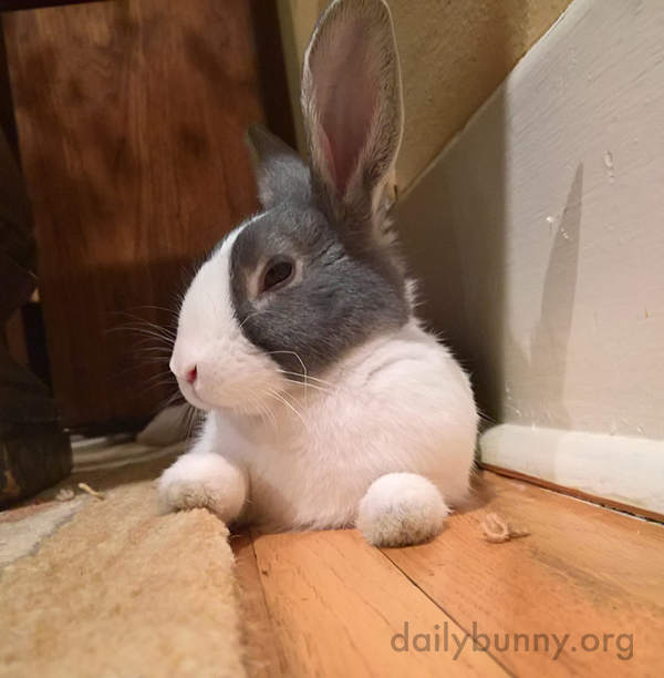 Bunny Has Suspicions