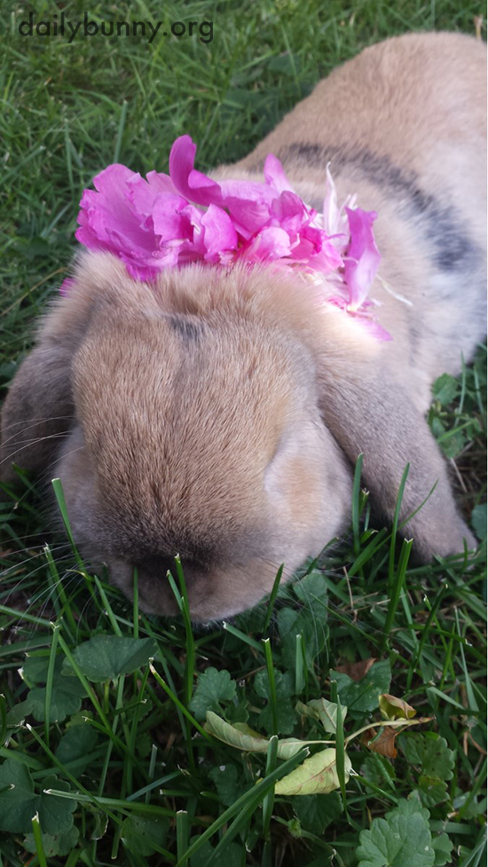 Bunny Embraces the Outdoors with Flowers in His Fur