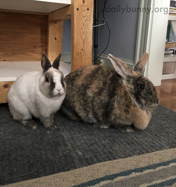 Bunnies Have Found a Spot Where They Can Supervise All the Room's Activities