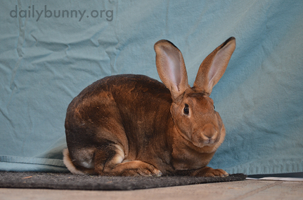 Bunny Looks Surprised to Be the Subject of the Photo Session
