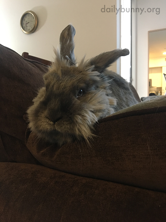 Bunny Has Found a Cushy Spot on the Sofa